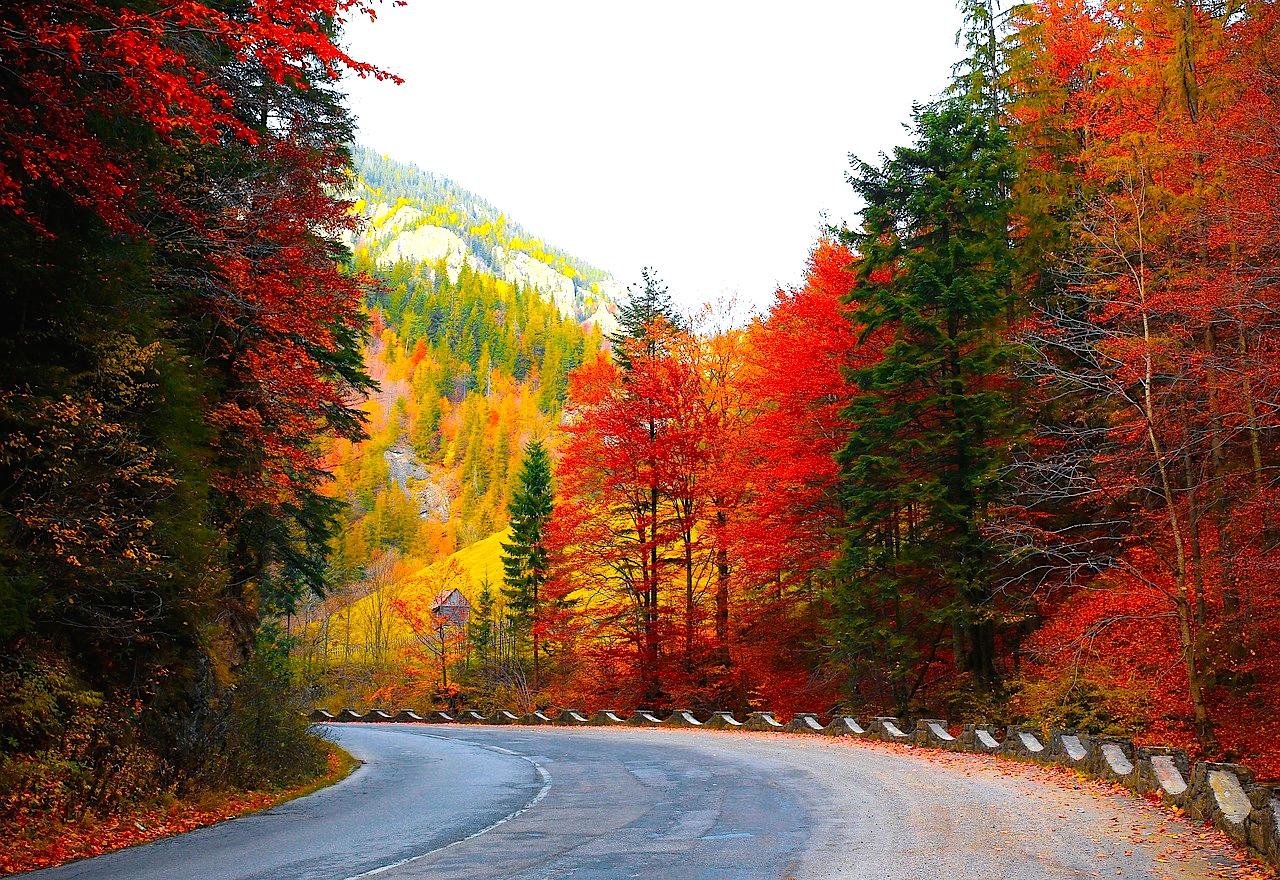 forest-road-1345751_1280